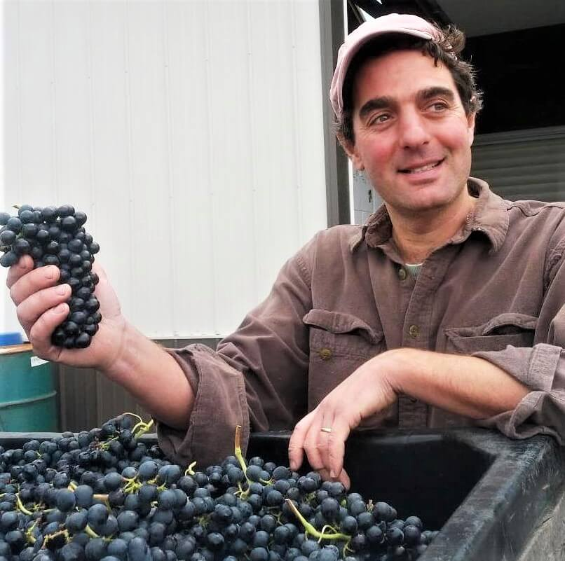 Vinny holding a cluster of grapes during wine production and harvest season.